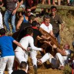Encierro del Pilón de Falces :: Disfruta Navarra, Turismo en Navarra